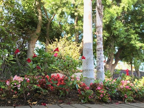 Best Western Plus Hacienda Hotel Old Town: lovely plantings
