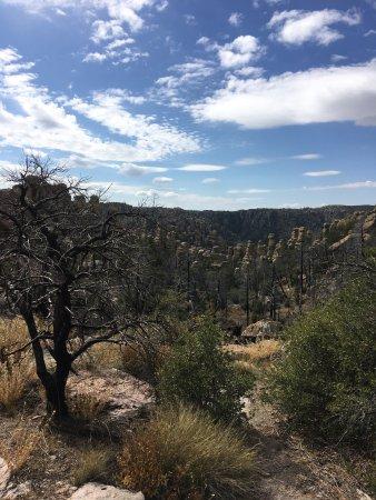 Willcox, Arizona: photo9.jpg