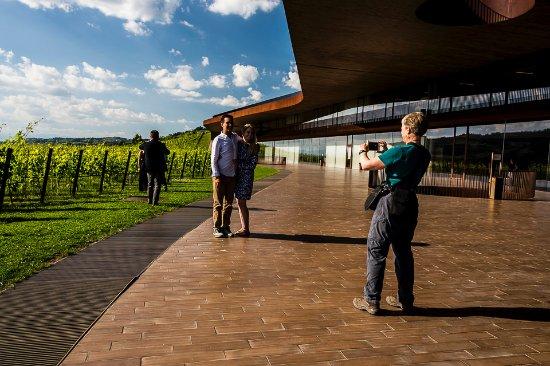 San Casciano in Val di Pesa, Italy: Antinori nel Chianti Classico - winery and vineyard together