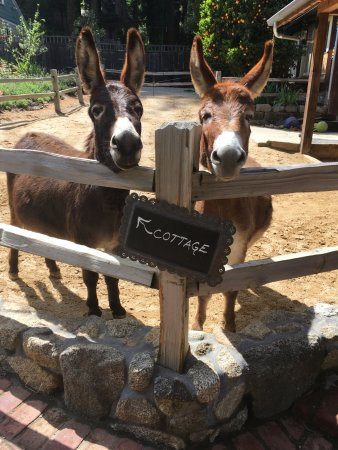 """Hartman Inn : Our donkey """"directional sign."""""""
