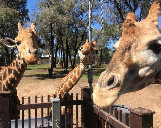 Ντάμπο, Αυστραλία: photo2.jpg
