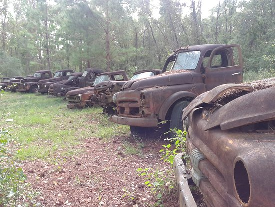 Roadside Rusted Ford Trucks: Front row