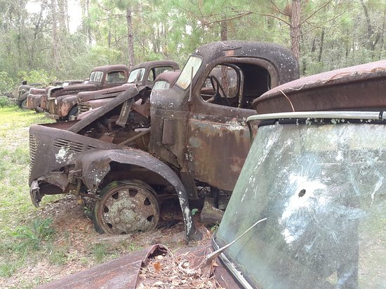 Roadside Rusted Ford Trucks: A few bulletholes about!