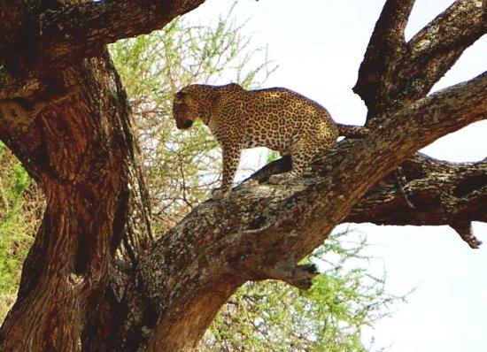 Национальный парк Тарангире, Танзания: 20171010_131010_large.jpg