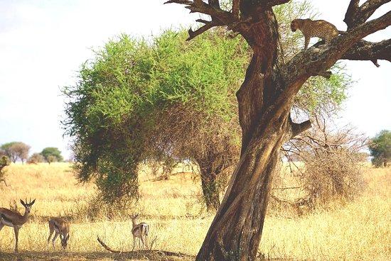 Национальный парк Тарангире, Танзания: 20171010_130929_large.jpg