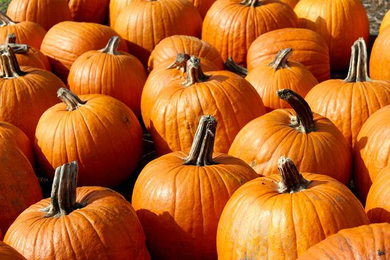 North Andover, ماساتشوستس: Pumpkins