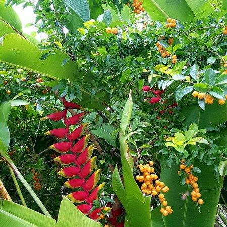 Koro Sun Resort and Rainforest Spa: IMG_20171006_071132_023_large.jpg