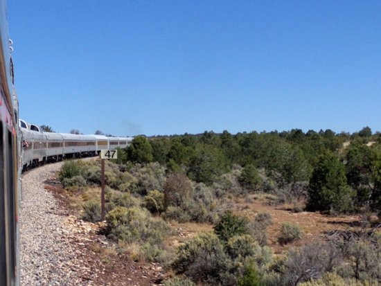 Williams, AZ: Entering the forest