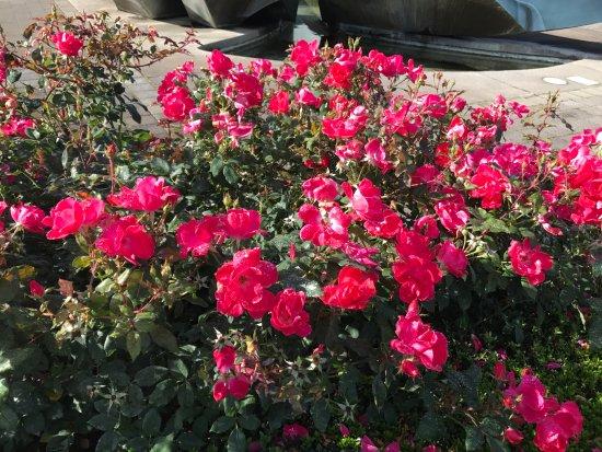 Salem, OR: Flowers in bloom
