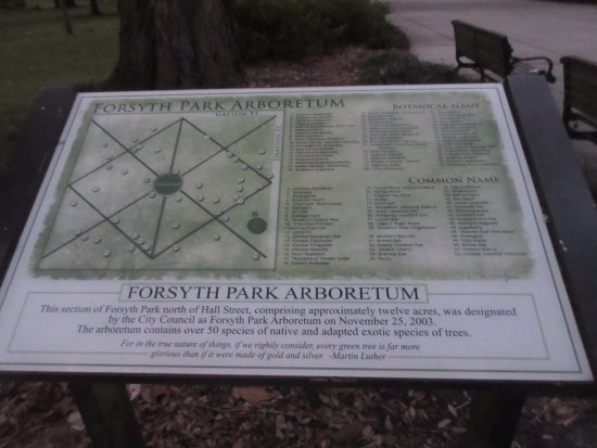 Forsyth Park: Diagram of the park and the arboretum