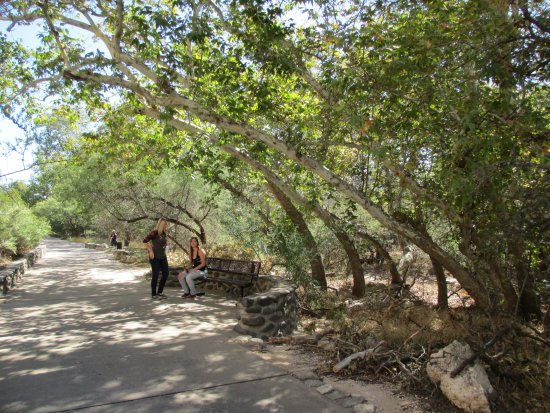 Montezuma Castle National Monument: The path to the site is shaded by lush trees.