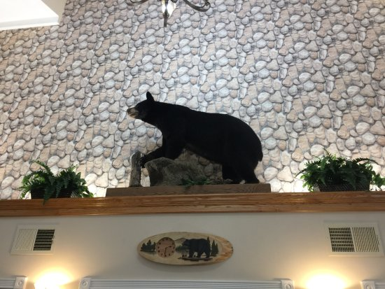 Orono, ME: Taxidermied bear in lobby above check-in desk.