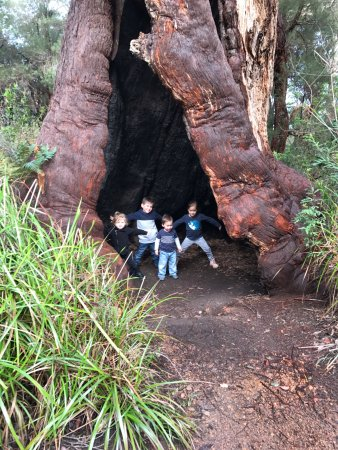 Denmark, Australia: Tingle Tree