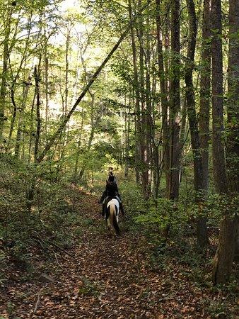 Mineral Bluff, Georgien: Appalachian Trail Rides