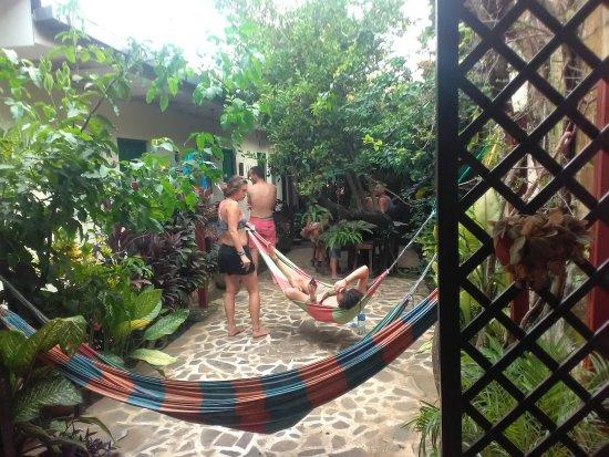 Hostal Casa Ivana: we have a lot of hamocks in our garden