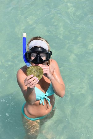 Captain Randys Fishy Business: snorkeling a fun way to find shells!