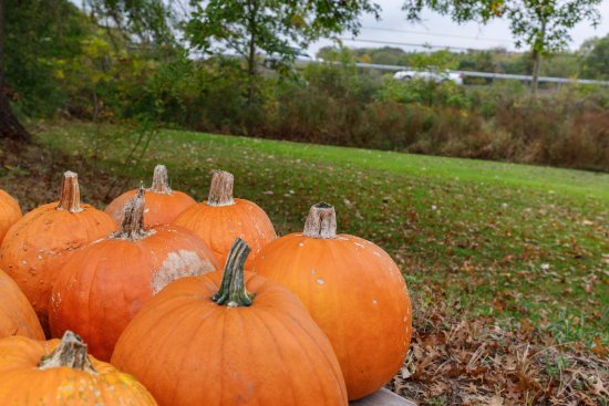 New Hampton, Estado de Nueva York: Pumpkins