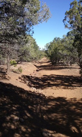 Red Mountain Trail : trail 2