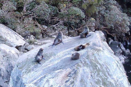 Fiordland National Park, Nouvelle-Zélande : photo4.jpg