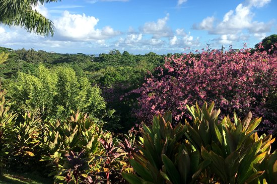 Princeville Botanical Gardens: Beautiful Flowers Bloom Year Round