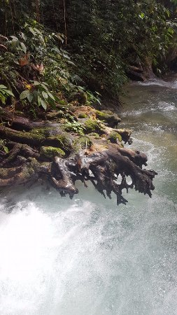 Mayfield Falls: Tree trunk hovering over the falls.