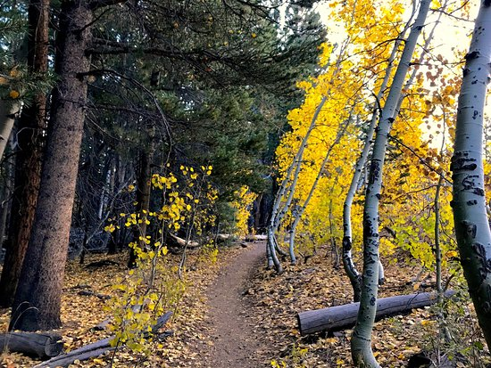 June Lake, CA: The trail gets flatter and smoother after the initial climb. Beautiful fall foliage along the wa