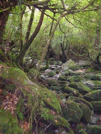 Shiratani Unsuikyo Valley (Kumage-gun Yakushima-cho) - All You Need to Know B...