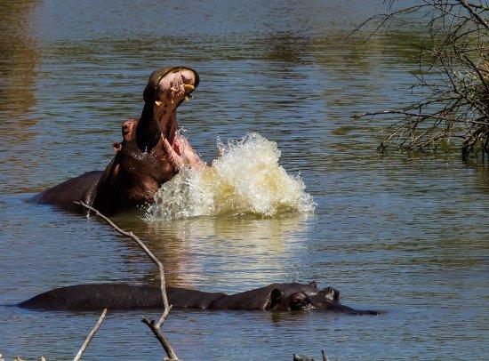 Hekpoort, Sudáfrica: Hippo Pool