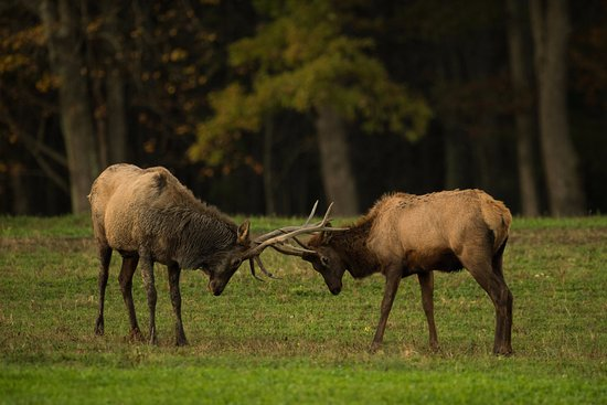 Benezette, PA: Elk Country Visitor Center