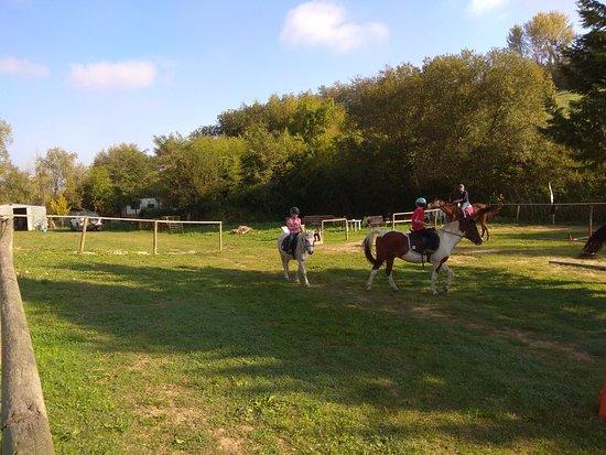 Cevoli di Lari, Italy: Für jede Größe ein passendes Pferd