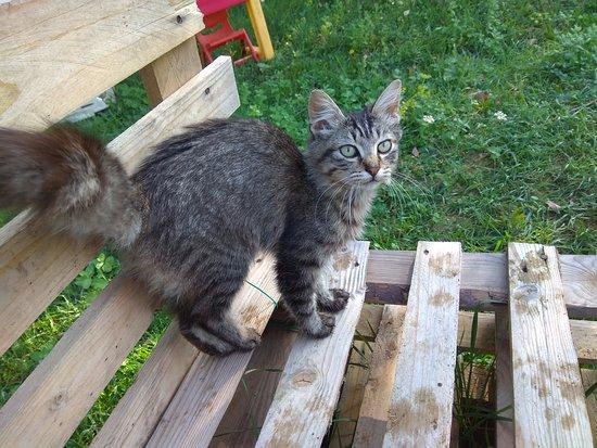 Il Ranch di Carlotta: Auch andere Tiere (Katzen, Hunde, Ziegen) befinden sich auf der Ranch von Carlotta