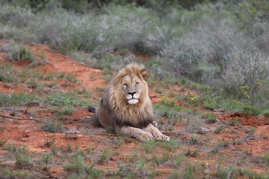 Shamwari Game Reserve, South Africa: photo7.jpg