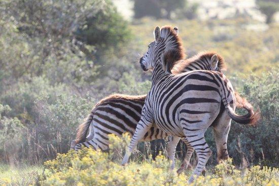 Shamwari Game Reserve, South Africa: photo8.jpg