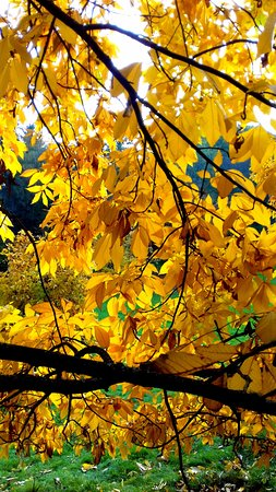 Godalming, UK: Autumn colour