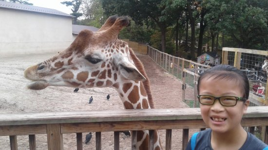 Norristown, PA: Our daughter Madison feeding the giraffes