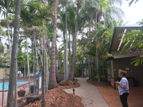 Rockhampton, Australia: photo2.jpg