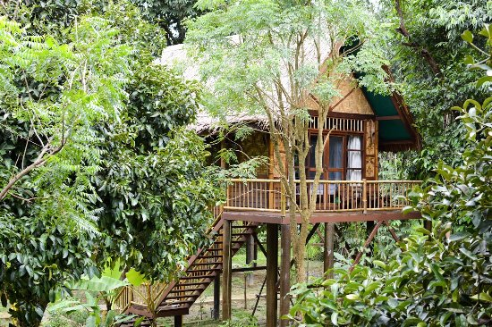 Khlong Sok, Thailandia: Single-storey Treehouse