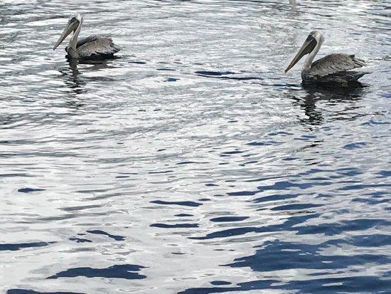 Homosassa Riverside Resort: photo1.jpg