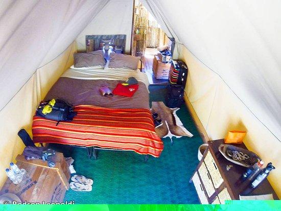 Amakhala Game Reserve, Sudáfrica: IMG_20171009_213351_366_large.jpg