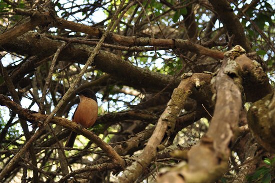 Arniston, Sudáfrica: De Mond wildlife
