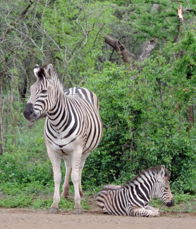Santa Lúcia, África do Sul: Mother and young on safari with Wild-Life Tours Africa