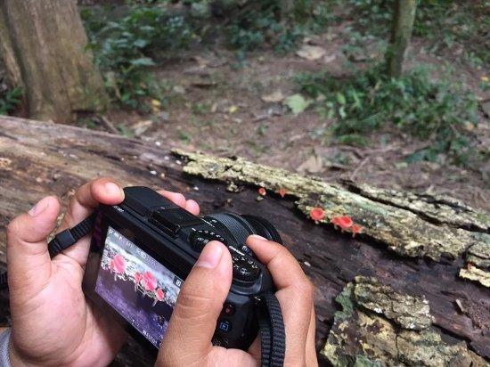 Sara Buri, Thailand: Mushroom photo trip on rainy season.