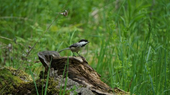 Lindsay, Canada: A variety of birds are abundant at Ken Reid Conservation Area.