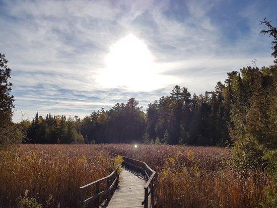 Lindsay, Canada: The Marsh Boardwalk at Ken Reid Conservation Area.