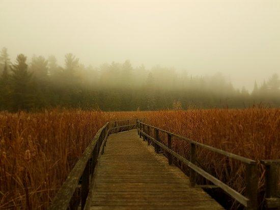 Lindsay, Canada: The Marsh Boardwalk on a foggy morning.