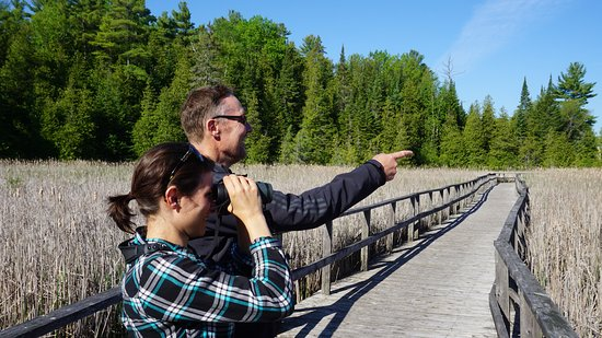 Lindsay, Kanada: Birders enjoying the view from the Marsh Boardwalk.