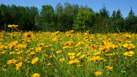 Lindsay, Canadá: A field of wild flowers at Ken Reid Conservation Area.
