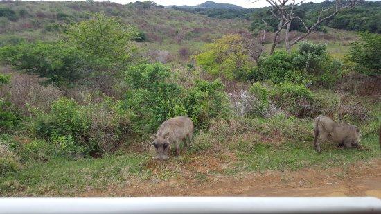 St Lucia, Sudáfrica: Safari