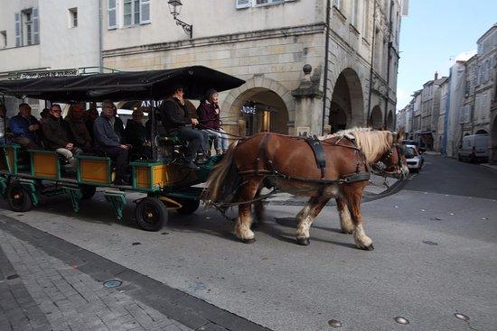 Rue du Palais : Cette rue pourrait laisser la place aux chevaux !