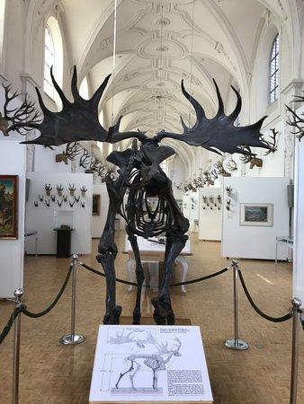 Museum of Hunting and Fishing (Deutsches Jagd und Fischereimuseum): Skelton 1